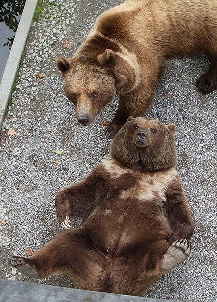 Previous residents of the bear pits in Bern, Tana and Pedro. Photo by Marco Amstutz, via Wikimedia Commons.