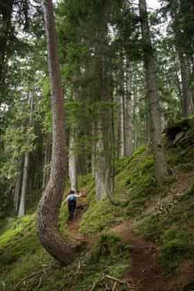 Howald forest, Niederhorn