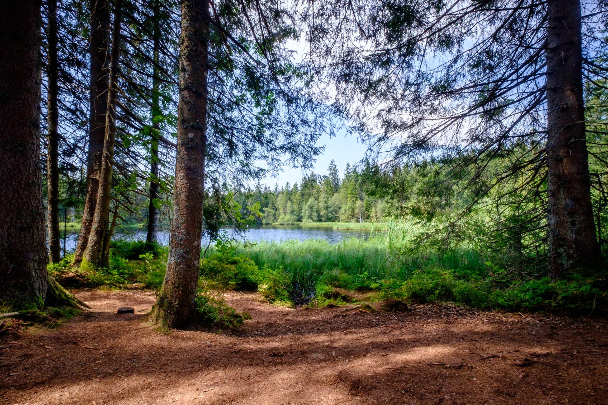 Forest and lake shore at Étang de la Gruère