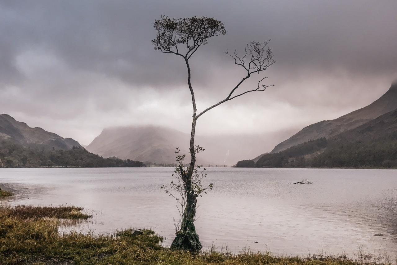 The Buttermere Tree, Cumbria