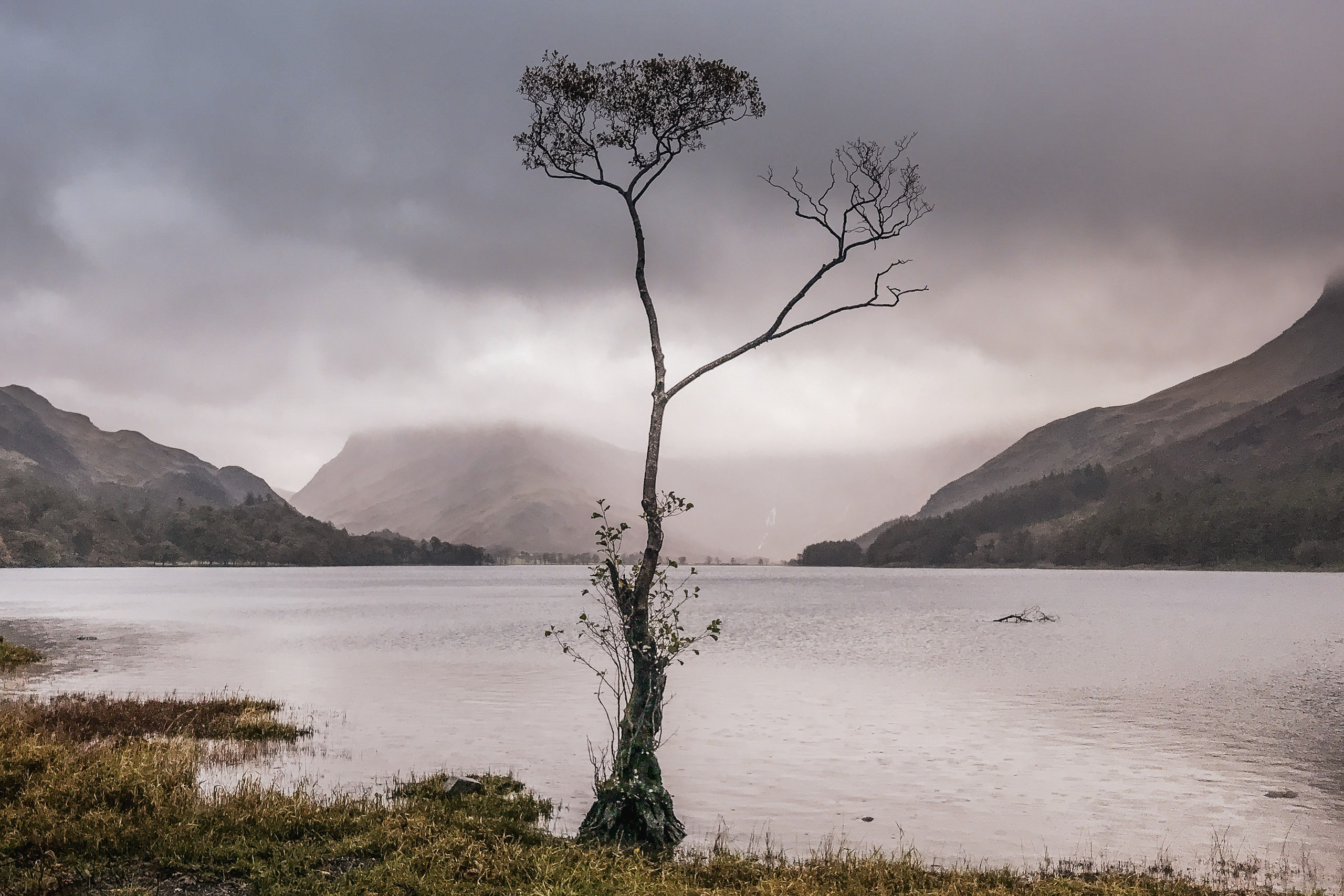 The Buttermere Tree, Cumbria