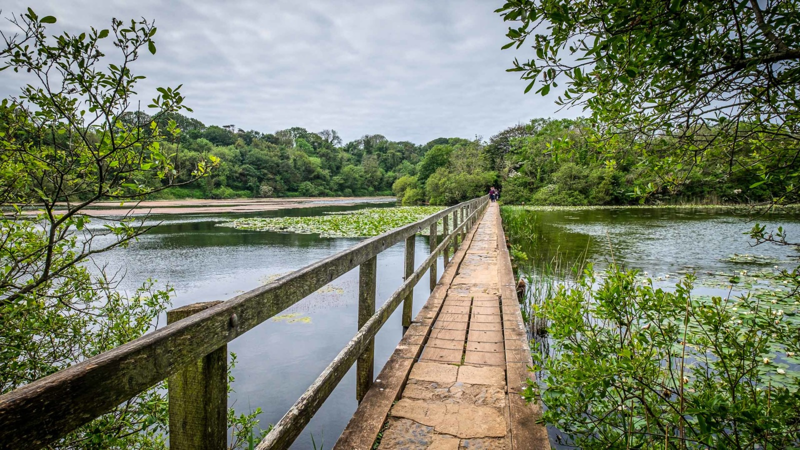 Bosherston lily pools in south Wales