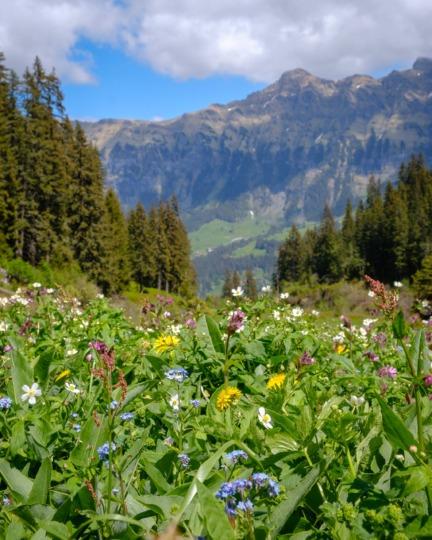 Mountain View Trail, Lauterbrunnen Valley