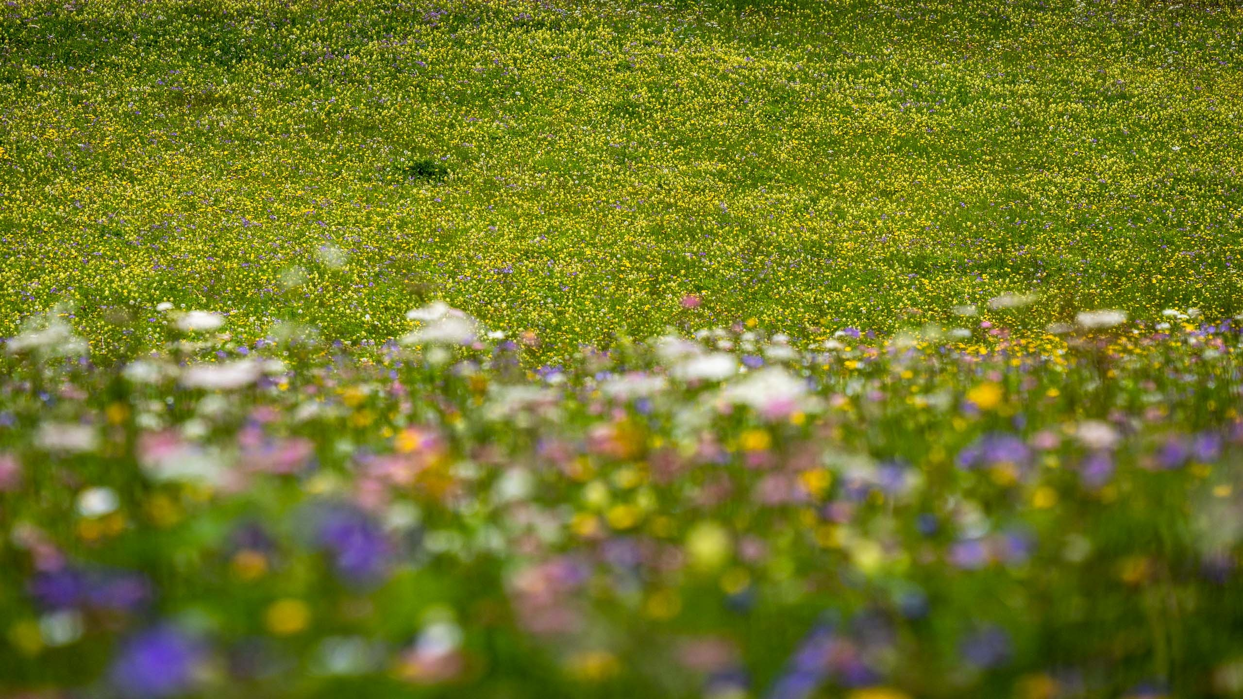 Meadow at Eggboden