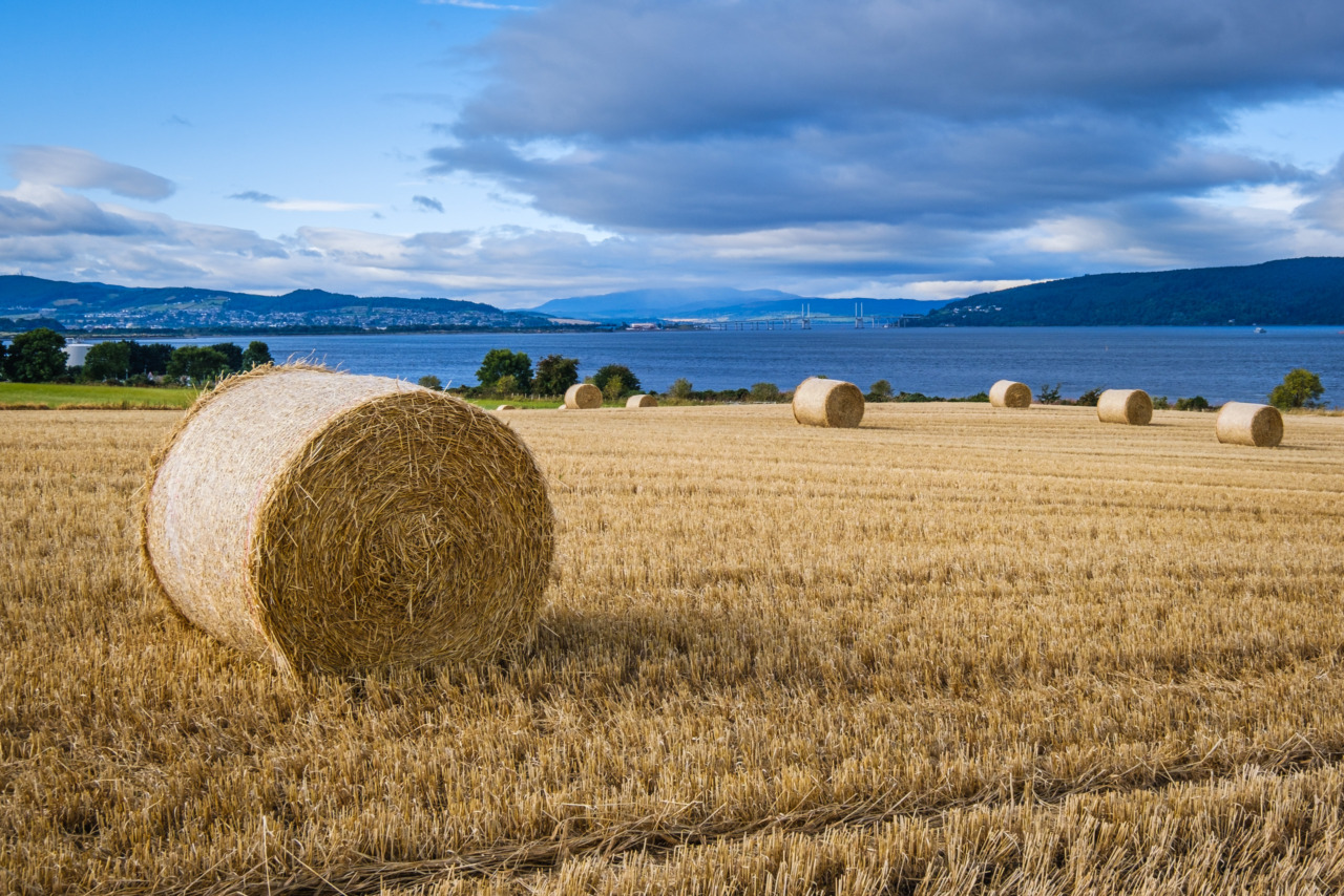 Allanfearn and the Moray Firth