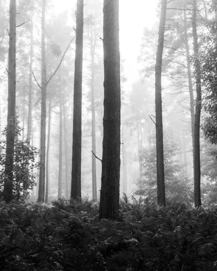 Kinnoull Hill forest