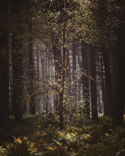 Tentsmuir Forest, Scotland