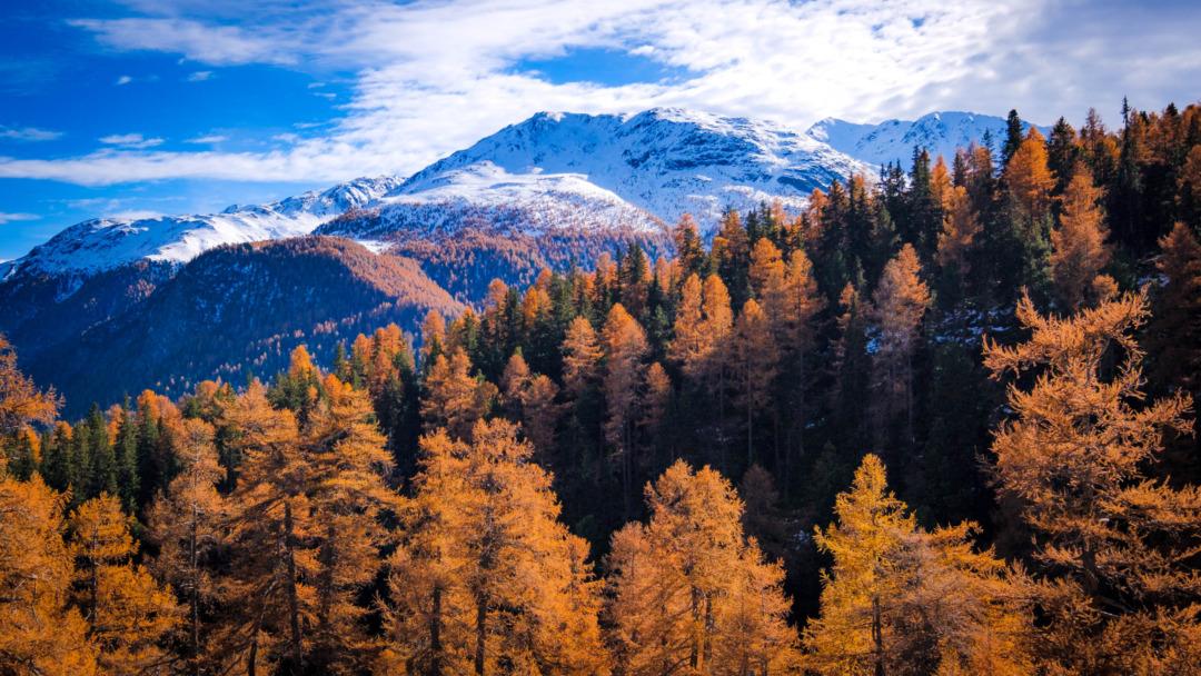 Autumn colour on the Albula Pass in Engadin
