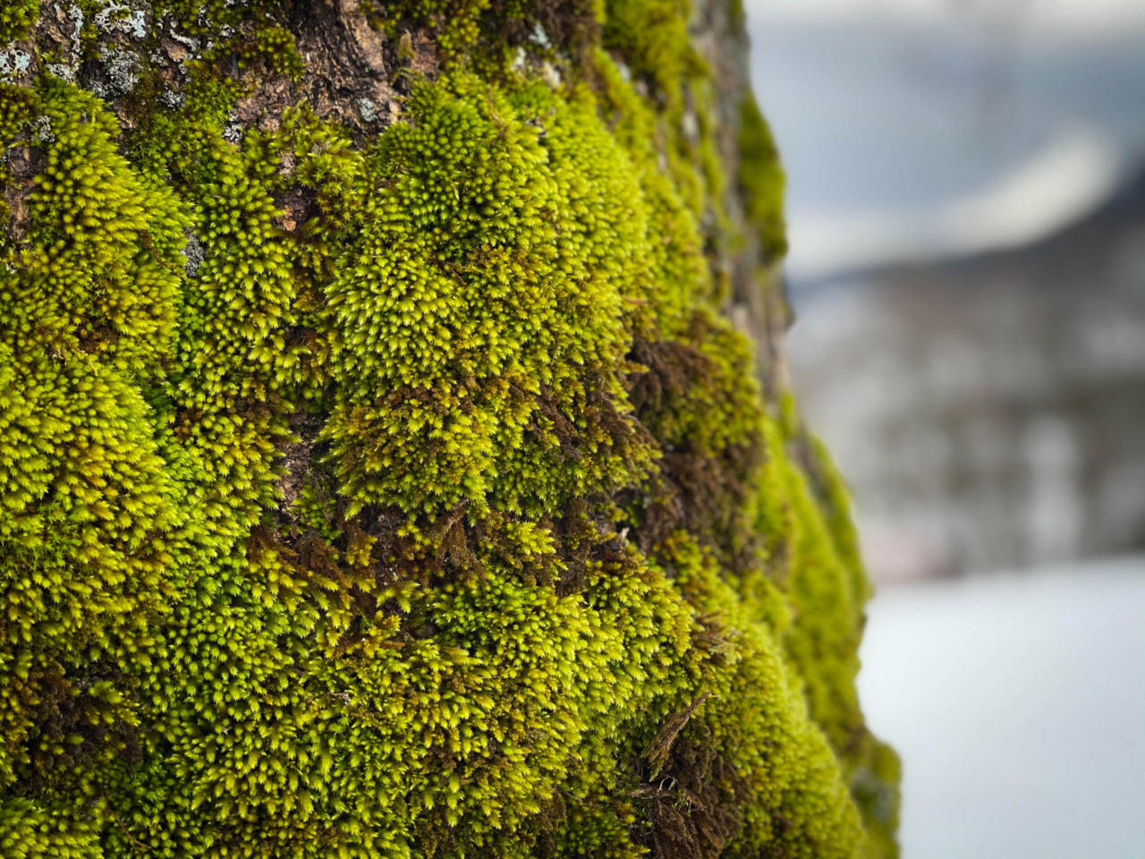Moss on a tree in Grindelwald