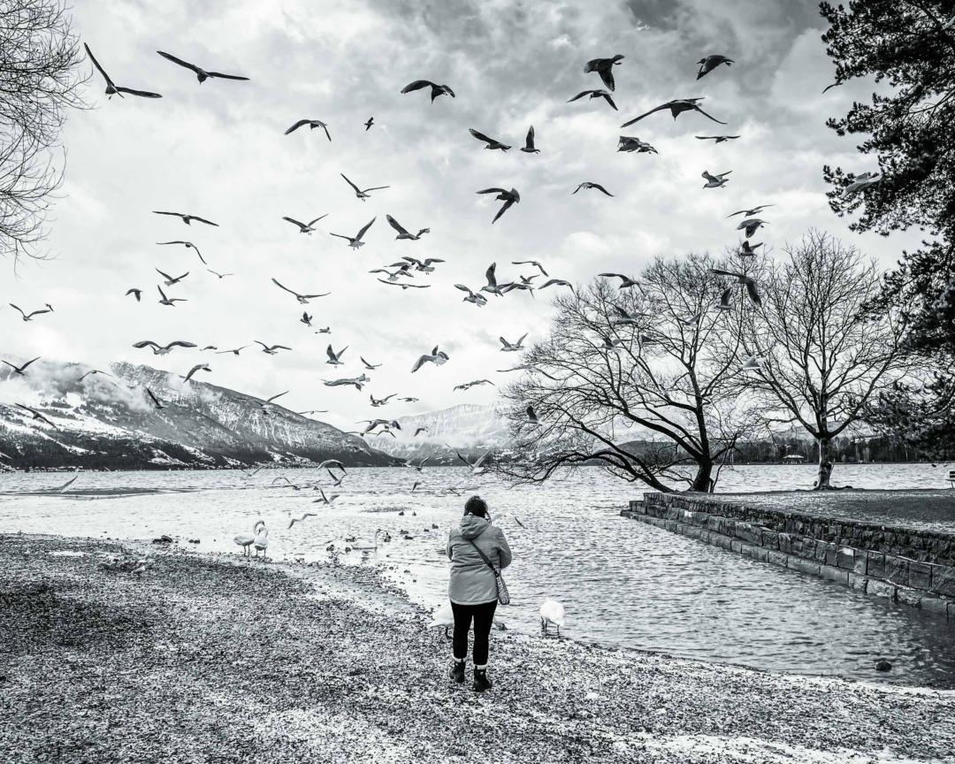 Feeding the birds at Bonstetten Park