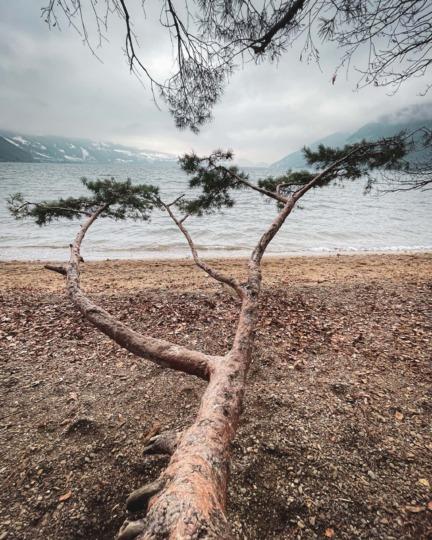 The Branch at Weissenau