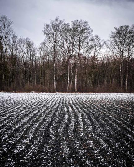 Winter field at Galmiz