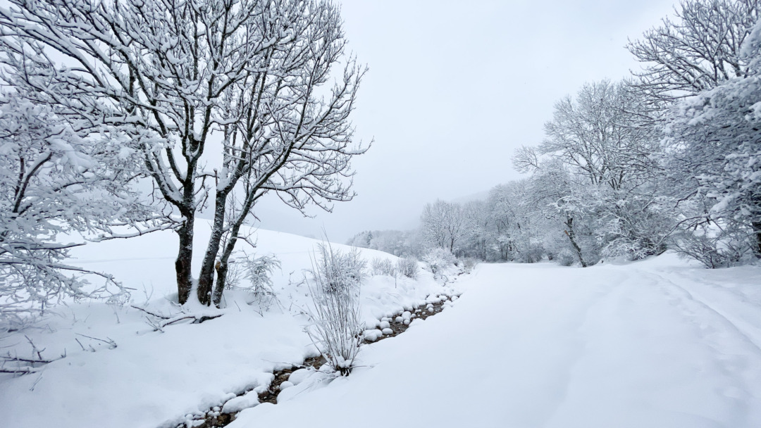 Snow in Le Pâquier, Switzerland