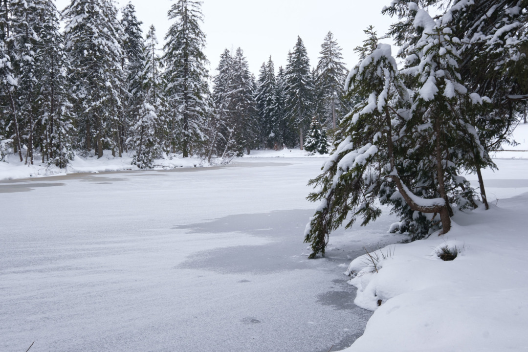 Frozen lake and snowy forest at Étang de la Gruère