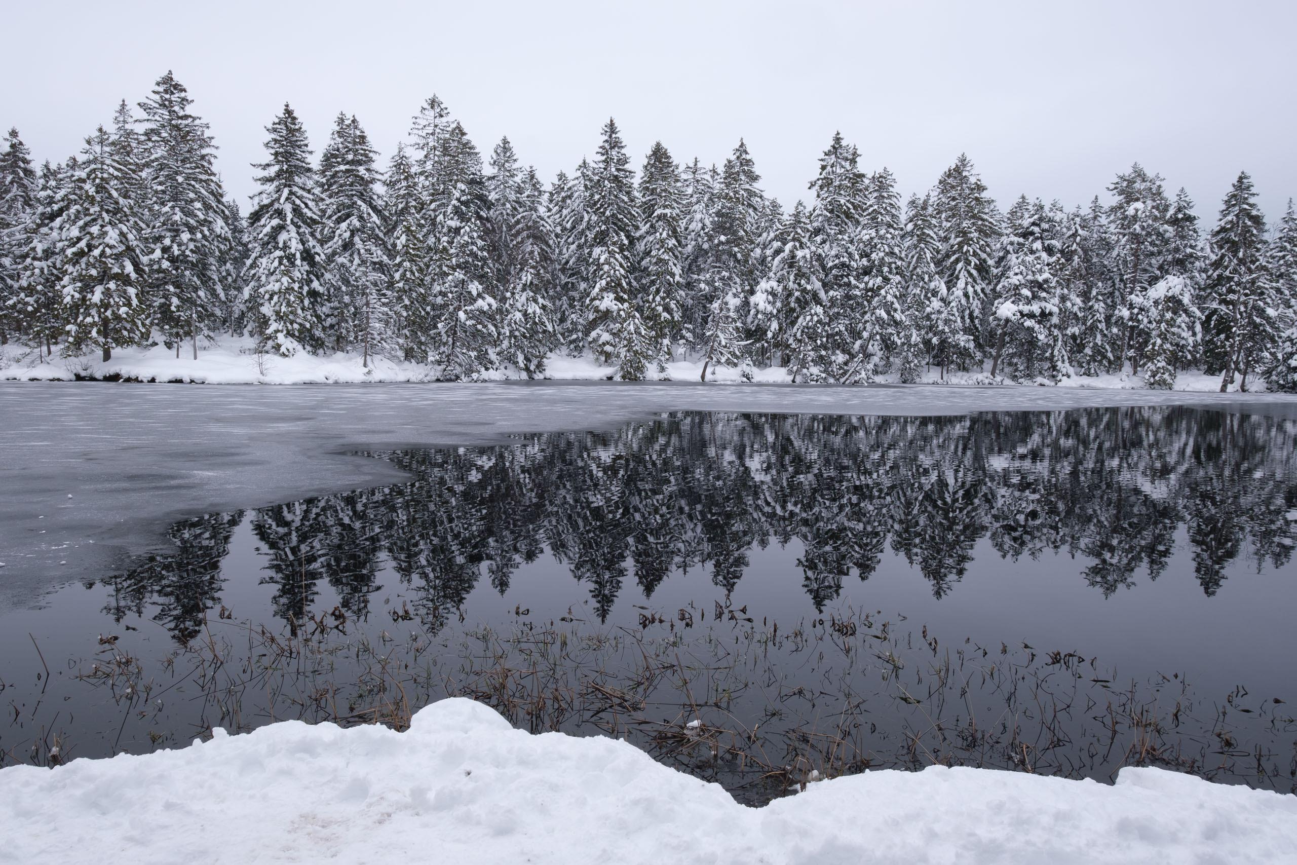 Partially-frozen lake at Étang de la Gruère