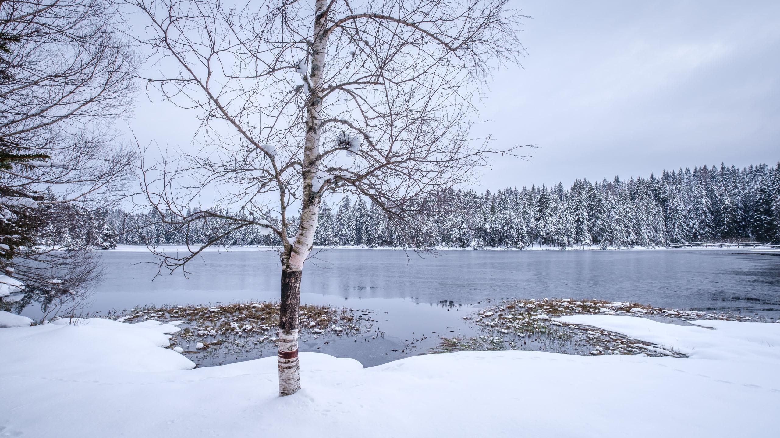 Frozen lake and snowy forest at Étang de la Gruère