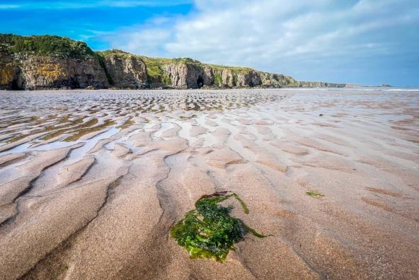 Close-up of seaweed on Lunan Bay beach